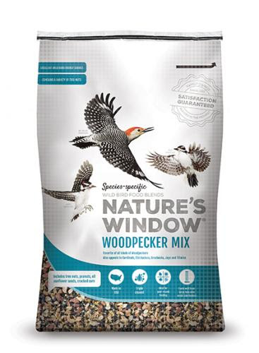 woodpecker food